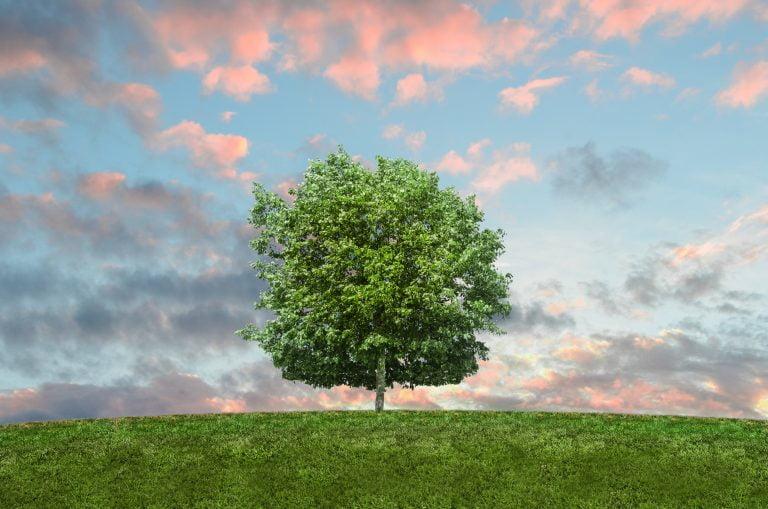 ekologiczne przedmioty codziennego użytku
